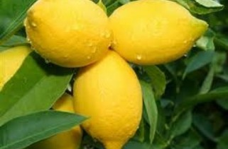 beauty-treatments-benefits-and-natural-home-remedies-using-lemons
