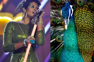 celebrity-hair-kelis-claims-ownership-of-the-peacock-feather-trend