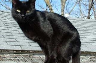 wheres-the-blacks-on-the-cats